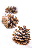 Trio of fir cones in the snow Royalty Free Stock Photos