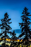 Trio of fir trees Stock Image