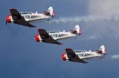 Trio of Harvards Stock Image