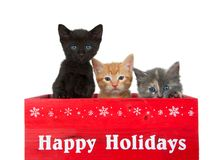 Trio of holiday kittens isolated on white. Three diverse kittens in a red wooden box with Happy Holidays printed in white across the front. Black, orange and stock photography