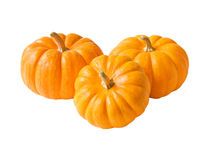 Trio of Mini Pumpkins Stock Image