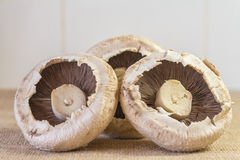 Trio of Mushrooms. An image of trio of large Mushrooms on a hessian base and white background Stock Photos