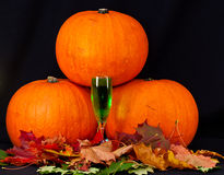 A trio of pumpkins against a black background Royalty Free Stock Photo
