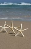 Trio of star fish. Three starfish upright on deserted idyllic beach, with the ocean and beautiful blue sky in the background royalty free stock images