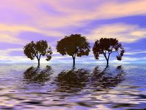 Trio trees.  Sunset Stock Photos