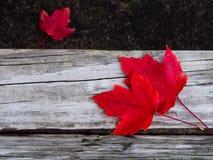 Trio vermelho Fotos de Stock Royalty Free