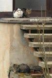 Trio von Katzen Stockfoto