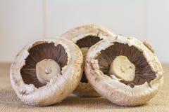 Trio von Pilzen Stockfotos