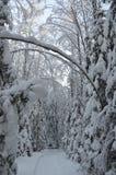 Triomphe en bosque del invierno Fotos de archivo libres de regalías