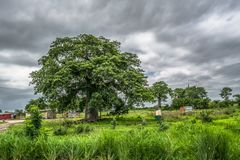 View with typical village houses, baobab trees and other types of vegetation, power lines and cloudy sky as. Trip through Angola's lands 2018: View with stock images