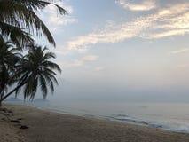 Palm coconut sky beach sand trip royalty free stock photo