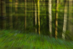 Trip through the forest Stock Photography