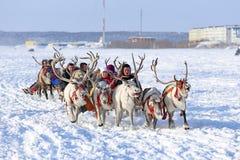 Trip on reindeers Stock Photo