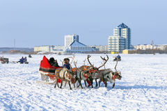Trip on reindeers Royalty Free Stock Photos