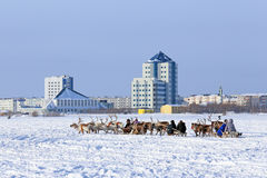 Trip on reindeers Royalty Free Stock Photo