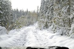 A trip through the Siberian forest Taiga in the evening, on an off-road car. A little snow passed. stock photo