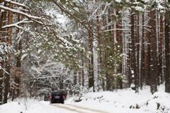 A trip by snowy winter forest road Stock Images