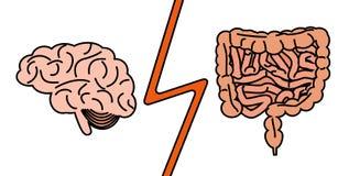 Tripa contra concepto del cerebro Foto de archivo libre de regalías