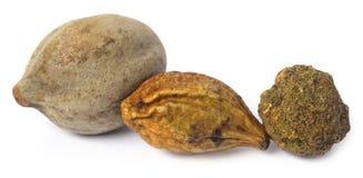 Triphala, ayurvedic果子的组合 免版税库存照片