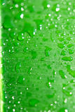 tripical grön leaf arkivbilder
