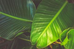 Tripical leaves background Stock Photography