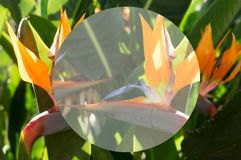 Tripical leaves background Royalty Free Stock Image