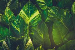Tripical leaves background Royalty Free Stock Photos