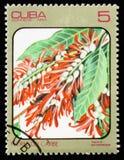 Triplaris surinamensis, serie av bilder Arkivfoto