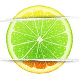 Triple citrus fruit Royalty Free Stock Photography