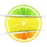 Triple citrus fruit Royalty Free Stock Image