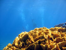 Triple divers. Coral with 3 divers in background. shot in the Red Sea royalty free stock photo