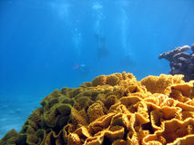 Triple divers. Coral with 3 divers in background. shot in the Red Sea stock image