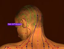 Acupuncture Point TE21 Ermen, 3D Illustration, Brown Background stock photo