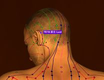 Acupuncture Point TE19 Luxi, 3D Illustration, Brown Background royalty free stock image