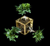 Triple ficus. Collage isolated on black Stock Photography