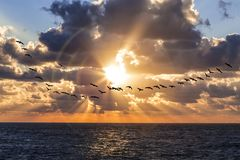 Triple halo on the backdrop of the setting sun. And a flock of cormorants flying royalty free stock photo