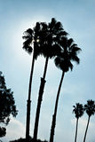 Triple Palm Tree Silhouette Royalty Free Stock Image