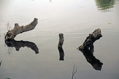 Triple reflection in the lake Stock Photography