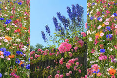 Triple summer flowers Royalty Free Stock Photos