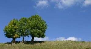 Triple trees Royalty Free Stock Images