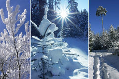 Triple - winter forest Stock Photography
