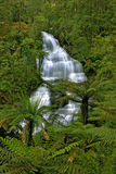 Triplet Falls. In Otway National Park Royalty Free Stock Image