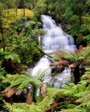 Triplet falls. Beautiful Triplet falls in Australian forest Stock Photos