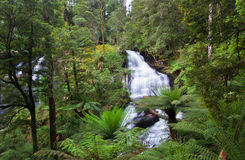 Triplet Falls. In the Cape Otway National Park looks like a scene from Jurassic Park with massive tree ferns hanging over the water, and a sense of completely Royalty Free Stock Photos