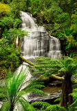 Triplet falls, the Otways National Park. One of the most beautiful waterfall in the Otways National Park in Victoria Stock Images