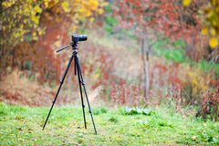 Tripod with camera lens standing on autumn lawn in forest Royalty Free Stock Image