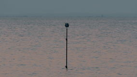 Tripod with cameras shooting 360 degree sea scene. Tripod with seven cameras in a holder standing in the water to make 360 degree video, evening scene stock video