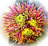 Trippy цветок Стоковое Изображение RF