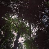 Trippy Bäume Lizenzfreie Stockfotografie