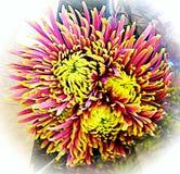 Trippy kwiat Obraz Royalty Free